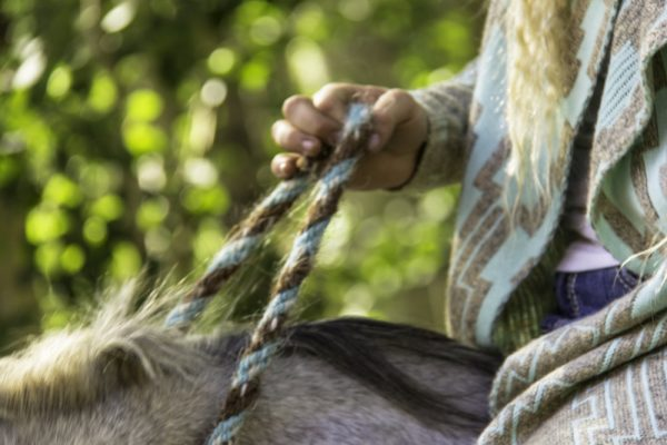 Bridleless Neck Rope Closeup