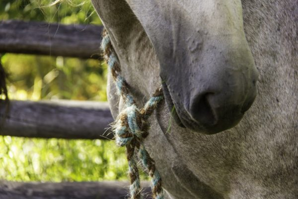 Bridleless Neck Rope Closeup 2